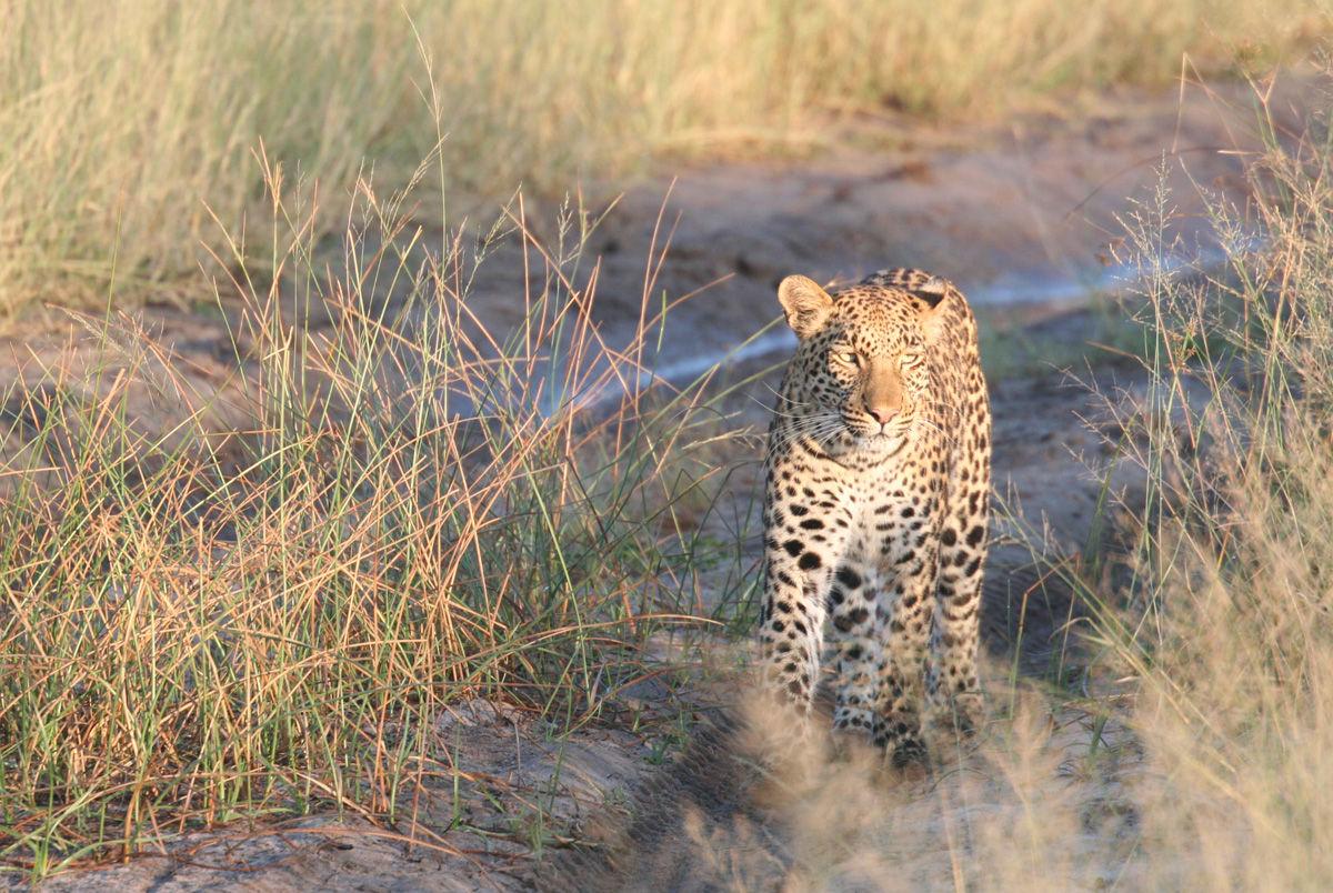 Le Botswana, une destination de tourisme de luxe par excellence