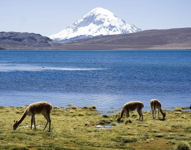 3 principaux parcs nationaux à ne pas manquer au Chili