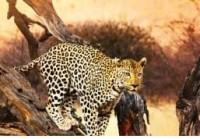 Le parc national d'Etosha, un haut lieu de safari en Namibie