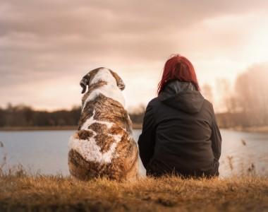 Décès de son animal : que faire de la dépouille?