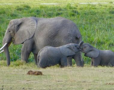 Quels parcs naturels choisir pour un safari au Kenya ?