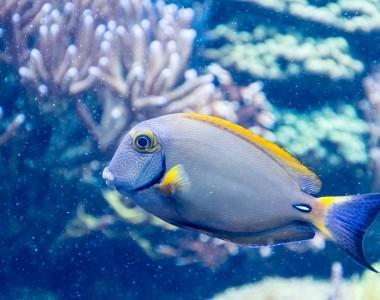 Chauffer son aquarium : trucs et astuces