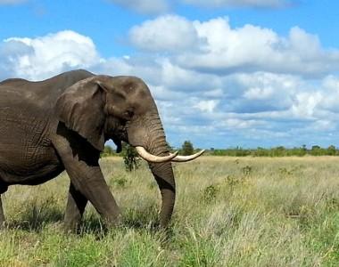 Visiter quelques régions avec un spécialiste de voyage en Afrique du Sud