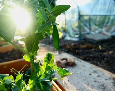 Aménagement jardin : comment installer votre pépinière?