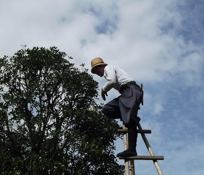 Prendre soin de son verger : élaguer les arbres fruitiers pour plus de produits