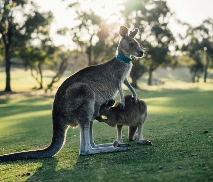 Vacances en famille en Australie: 3 activités à apprécier avec des enfants