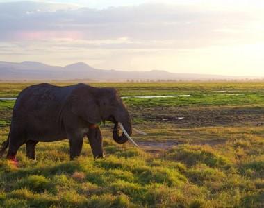 3 lieux à découvrir absolument au Kenya
